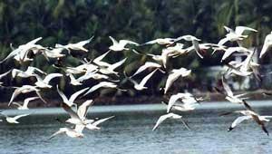 प्रवासी पक्षी