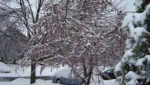 अमरीका में बर्फबारी