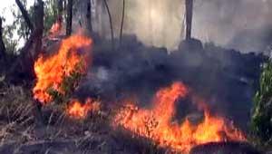 fire in jammu kashmir