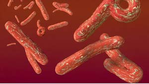 इबोला वायरस