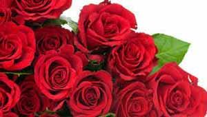 गुलाब फूल