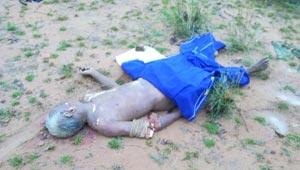 हाथी ने मारा