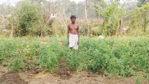 बीजापुर का किसान