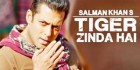 salman as old tiger