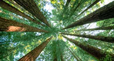 छत्तीसगढ़ वन जंगल की कटाई पेड़ कटाई