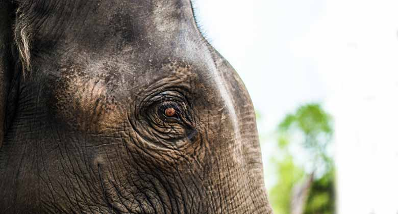 लेमरु हाथी रिजर्व